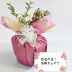 敬老の日プレゼント 盆栽 長寿の願いを込めて 喜ばれるミニ長寿梅の盆栽   送料無料