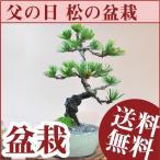 【父の日】父の日のプレゼントに盆栽 はじめてでも育てやすい五葉松に育て方冊子と説明書付き 趣味の盆栽 【送料無料】