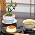 お花とお菓子を楽しめる盆栽の贈り物