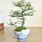 敬老の日にお花の盆栽とお菓子のギフトセット 送料無料 長寿梅と抹茶ケーキ