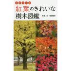 紅葉のきれいな樹木図鑑 ポケット版/亀田龍吉