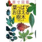 原寸図鑑 葉っぱでおぼえる樹木/濱野周泰(その他)