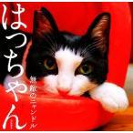 はっちゃん 無敵のニャンドル/八二一【写真】
