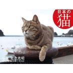毎日クーポン有/ カレンダー '22 日本の猫/岩合光昭