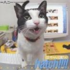 hatch!!!! はっちゃん日記 4/八二一