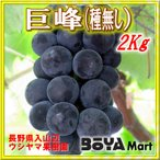 巨峰(種無し) 2kg(およそ4房)〜寒暖の美味しさ〜山辺葡萄【長野県入山辺ウシヤマ果樹園】