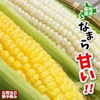 【食べ納め】とうもろこし 北海道産 なまら甘い 生でも食べれる 朝採れたてを発送 伊藤農園 白黄 食べ比べ 2L 8本前後 2Lサイズ 平均8本 北海道産 送料無料