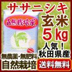 2016年(平成28年) ササニシキ 玄米 5kg 無農薬玄米 ささにしき