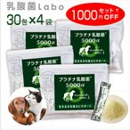 乳酸菌 ペット 犬 猫 サプリメント プラチナ乳酸菌5000α (100包入)送料・代引手数料無料