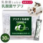 乳酸菌 ペット 犬・猫 プラチナ乳酸菌5000α (20包入)ゆうメールで送料無料