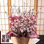 【桜 誕生日プレゼント ギフト 女性 春の花】早春のおまかせ桜アレンジ