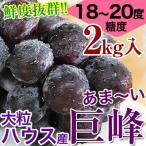 鮮度抜群!朝採り巨峰2kg(4〜6房入)■ハウス栽培■糖度18〜20度!大変みずみずしく、甘さたっぷりの大粒ぶどう(fy5)