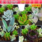 多肉植物の寄せ植え〜お部屋に癒しのグリーンを〜。5種類からお好みの3つをお選び下さい。