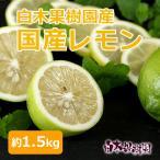レモン 約1kg 白木果樹園産 国産