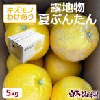 NB-K5 露地夏ぶんたんご家庭用 約5kg