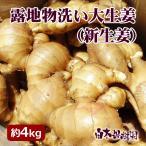 露地物土つき大しょうが(新生姜) 約4kg 高知 しょうが 生姜 ショウガ 新