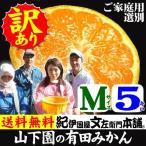和歌山有田みかん 山下園の有田みかん ご家庭用 (Mサイズ) 約5kg 温州みかん・正しくは「ありたみかん」ではなく、「ありだみかん」です