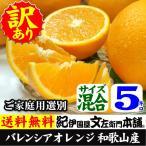 紀州有田産 わけあり柑橘・国産バレンシアオレンジ(買得品5kg)ご家庭用