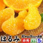 春みかん はるみ 5kg 秀品選別 サイズ混合果実 和歌山県有田産 完熟かんきつ