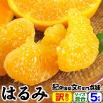 雅虎商城 - 春みかん「はるみ」5kg(紀州有田産)訳ありB級選別品・サイズ不選別果実    わけあり 訳あり 不揃い プチプチ果実で人気です
