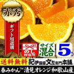 清見オレンジ5kg(ギフト選別品)紀州和歌山有田みかんの里から最高級選別