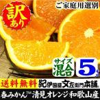 訳あり清見オレンジ5kg・紀州和歌山有田みかんの里から (規格外 不揃い)