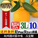 紀州湯浅特産・葉付き三宝柑(3L/10kg)和歌山県有田みかんの里から