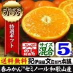 セミノールオレンジ 特選ギフト品 5kg 紀州有田産 常温便  和歌山県・有田みかん