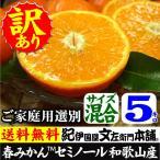セミノール オレンジ(買得品5kg)紀州有田産 (規格外 不揃い)わけあり 訳あり柑橘(皮に傷)・ご家庭用 常温便  和歌山県・有田みかん