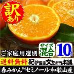 セミノールオレンジ (買得品10kg)紀州有田産 (規格外 不揃い)わけあり 訳あり柑橘(キズ)・ご家庭用 常温便  和歌山県・有田みかん