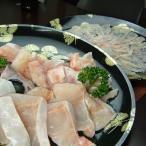 幻の魚(本クエ)ゴージャスセット 本クエ鍋セット+本クエ刺身薄造り  くえ鍋 高級食材 最高級