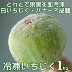 (冷凍)いちじく 1kg 品種:バナーネ (白いちじく・イチジク・無花果/和歌山県有田郡広川町)(クール冷凍便発送