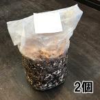 国産 無農薬 きのこ栽培キット 2個入り しいたけ栽培 菌床 説明書付き