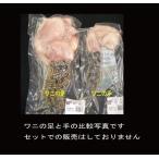 雅虎商城 - ワニの足【豪州産】Sサイズ1本(約300-500g)冷凍パック
