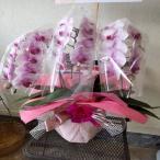 高級感のあるピンク色の胡蝶蘭をお祝い亊にメッセージを添えてフラワーギフトに。またお部屋のインテリアにもおススメです。