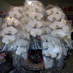 お祝い時に《白い豪華な5本立ての胡蝶蘭》をお届けします!!