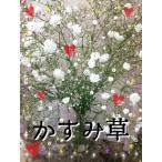 オプション商品!【白いかすみ草】★花束&アレンジ&供花★などに足してさらにボリュームアップ☆