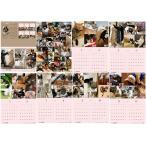 【ネコポス便可能】2018年 Cattery BRANCHE チャリティー壁掛けカレンダー /猫/ネコ/ねこ/子猫/乳飲み猫/