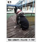 【犬服オリジナル】黒地にグレーチェック袖フード付きTシャツ #犬服通販(ボストンテリア・フレンチブルドッグ等)