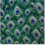 かわいいペーパーナプキン Peacock Feathers クジャク柄 211610 デコパージュ ドリパージュ