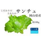 Yahoo! Yahoo!ショッピング(ヤフー ショッピング)オーガニック(有機)サンチュ グリーンスムージー/野菜ジュースに最適/西日本・ 岡山県産新鮮野菜 100%