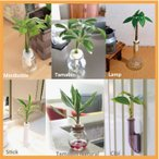 Yahoo!セラハイト土なし 清潔 水やり簡単 新生活応援 セラハイトバラエティーセット (6種類の観葉植物と容器のセット商品です。)