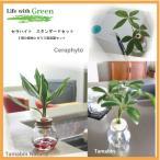 土なし 清潔 水やり簡単  セラハイトスタンダードーセット(セラミック栽培観葉植物6種とガラスビン容器セット)