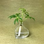Yahoo!セラハイト土なし 清潔 水やり簡単  「セラハイト」 アンブレラツリー ハート瓶付き
