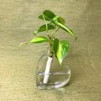 Yahoo!セラハイト土なし 清潔 水やり簡単  「セラハイト」 オキシカルジウム ハート瓶付き