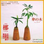 Yahoo!セラハイト土なし 清潔 水やり簡単  「セラハイト 梛(ナギ)の木と傘の木 『陶房うさぎ庵』特製 ツリーハウス 2個セット