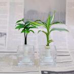 土なし 清潔 水やり簡単 良縁を結ぶ「梛(ナギ)の木」「ドラセナ・サンデリアーナ」と松野工業のガラス製「キューブベース」 2個セット スタンド式