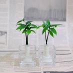 Yahoo!セラハイト土なし 清潔 水やり簡単 セラハイト 良縁を結ぶ「梛(ナギ)の木」と松野工業のガラス製「キューブベース」 2個セット スタンド式
