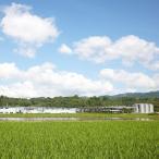 高橋酒造 白岳 米 焼酎 35度 熊本県 1800ml