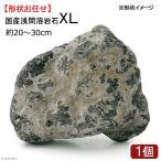 国産浅間溶岩石XL 1ヶ 約20〜30cm